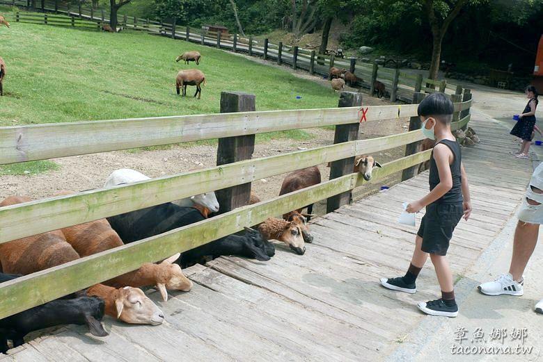 苗栗農場牧場》飛牛牧場  50公頃動物農莊  近距離觀賞乳牛、綿羊   鴨鴨大遊行不能錯過  可進行超萌互動 @章魚娜娜 ∞ 玩味生活