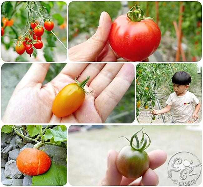 宜蘭員山鄉【禾昌農場】溫室培育新鮮無毒三色番茄、桃太郎,邊採邊吃還能將戰利品帶回家與親友分享!路過山林小溪;清涼你我的心。 @章魚娜娜 ∞ 玩味生活