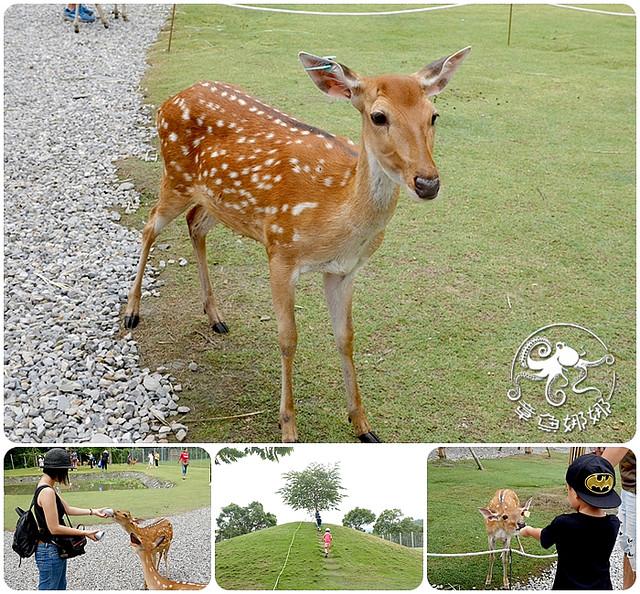 宜蘭冬山景點【斑比山丘】台版奈良餵食梅花鹿,享受被梅花鹿包圍的愉悅感!6歲以下免門票! @章魚娜娜 ∞ 玩味生活