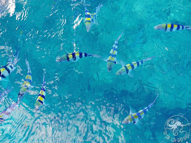 沖繩北部景點 名護市【海中公園】海中觀景塔+玻璃船,不用換衣服的出海看魚,還能海上餵魚好震撼!無緣的展望塔。 @章魚娜娜 ∞ 玩味生活